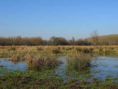 Wetland (Vulpe Photographie) Tags: paysage landscape france normandie normandy eure sony dschx400v