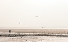 Solitude 644 (Wim Koopman) Tags: oosterschelde national park zeeland solitude atmosphere oyster oesterdam branches people walking mud river sea estuarium holland dutch fishing boat horizon monochrome