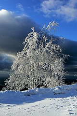 Snow Trees (Dan Daniels) Tags: audand panasonic trees snow blackforest schwarzwald germany deutschland winter winterlandscape wintersun