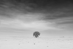 February 23, 2019 - A lone tree in the wake of the snowstorm. (Tony's Takes)