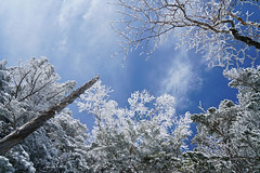 White trees (@yoshiki) Tags: winter snow sky tree wood frost mountain landscape japan