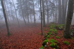Foggy morning in the forest (natureloving) Tags: nature fog winter forest mist trees woods natureloving nikon d90 nikonafsdxnikkor18300mmf3563gedvr