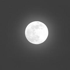 Spring Supermoon,Aberdeen_Mar 19_407 (Alan Longmuir.) Tags: monochrome grampian aberdeen misc sky moon springsupermoon