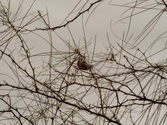 P1022600 (Claussm) Tags: jupiter 21m 200mm soviet russian lens vsco az arizona bird sky tree telephoto