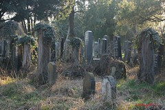IMG_8541 (Pfluegl) Tags: wien vienna zentralfriedhof graveyard europe eu europa österreich austria chpfluegl chpflügl christian pflügl pfluegl spring frühling simmering