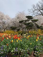 Topiary (pianoforte) Tags: dallas arboretum dallastx dallasarboretumandbotanicalgarden flowers dallasblooms spring 2019 spring2019