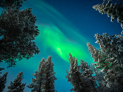 The Aurora Borealis - Ivalo, Lapland - Travel photography (Giuseppe Milo (www.pixael.com)) Tags: photo ivalo landscape notrthern finland snow lights aurora lapland travel photography borealis sky village trees europe geotagged ice onsale