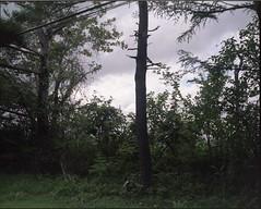 (✞bens▲n) Tags: mamiya 7ii kodak ektacolorgold160 80mm f4 6x7 film analogue medium format japan karuizawa kitakaruizawa trees