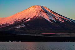 January Beni-Fuji (shinichiro*) Tags: 20190119sdim8049 2019 crazyshin sigmasdquattroh sdqh sigma1770mmf284dcmacrohsm january winter yamanashi japan jp fuji lakeyamanaka 32149413567 candidate