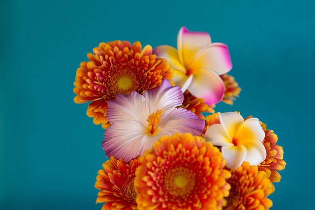Обои фон, букет, герберы, плюмерия, гибискус картинки на рабочий стол, раздел цветы - скачать
