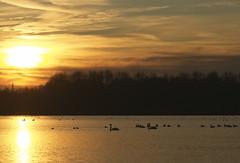 DSC06399 (janjanny) Tags: 2012 delftsehout fromaperture landscapes places seasons wildlifeandlandscapes winter