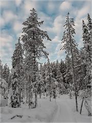 Ylläs-Finnland_92539 (uwe_cani) Tags: panasonic g9 finnland finland skandinavien scandinavia lappland lapland ylläs winter schnee snow natur nature outdoor landschaft landscape wolken clouds bäume trees himmel sky