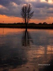 Lonely Tree (iPhone Fotograaf) Tags: clouds evening landscape nature sunset tree river iphone8plus sky reflection