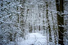 white world (Jos Mecklenfeld) Tags: winter snow schnee sneeuw forest wald bos nature natur natuur nulbos westerwolde sonya6000 sonyilce6000 selp1650 sonyepz1650mm niederlande nederland terapel groningen netherlands nl