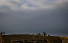Livido (Chiaro Chiari) Tags: cloudy nuvoloso nuvole clouds cielo sky campagna country hills colline piemonte italia italy febbraio february green verde natura nature trees alberi colors colori colours campi fields