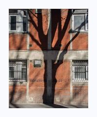 Plus d'ombre que de fruits (hélène chantemerle) Tags: soleil ombre arbre façade rouge noir ville cité urbain sun shadow tree front red black town city urban