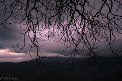Gothic Atmospheres in Triora, Liguria, Italy (TMStorari) Tags: triora witch witchcraft streghe paesedellestreghe valleargentina gothic dark lights purple december winter mountains montagna paesaggi landscape gothiclandscapes branches trees wood boschi atmosphere gothicphotography italia italy alpimarittime alpi italien liguria landscapes panorama shadows ombre blackandwhite