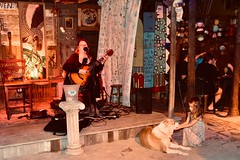 Blue Heaven Restaurant entertainer - Key West (stevelamb007) Tags: keywest blueheaven florida dog girl singer d7200 nikon stevelamb