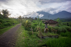 around Jatiluwih (kuuan) Tags: manualfocus mf voigtländer15mm cvf4515mm 15mm bali indonesia sonynex5n riceterace jatiliwuh tabanan view mountbatukaro footpath