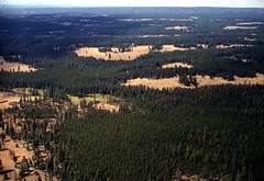 1969. Aerial view of mountain pine beetle damage in lodgepole pine. French Corral, Umatilla National Forest, Oregon. (USDA Forest Service) Tags: usda usfs forestservice foresthealthprotection stateandprivateforestry region6 r6 divisionoftimbermanagement pacificnorthwestregion insectanddiseasecontrol forestinsect foresthealth forestprotection forestentomology pnw aerialphoto aerialphotography lodgepolepine mountainpinebeetle aerialsurvey aerialdetectionsurvey aerialdetectionsurveys 1969 frenchcorral umatillanationalforest oregon lowelevation oblique insectdamage barkbeetle treedamage treemortality