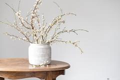 (CarolienCadoni..) Tags: sony sonyilcaa99m2 ilca99m2 sal50f14 50mmf14 blossom stilllife