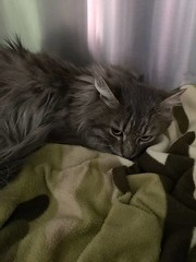 FOUND dlh grey tabby cat in #palliser now safe at Fish Creek Pet Hospital 403 873 1700 Pls rt & share to find family! YYC Pet Recovery shared a post. This cat was found in Palermo Way SW. It is now safe at Fishcreek Pet Hospital. 403 873 1700. This animal (yycpetrecovery) Tags: ifttt march 30 2019 0111am
