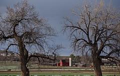 theRedBarn (blancopix) Tags: red barn springtime grass evening light