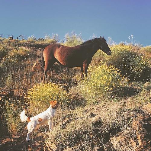 When friends meet ☺️ #dog #dogsofinstagram #horse #spain #españa #andalucia #travel #hike #nature #mextures