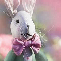 Oh My Ears and Whiskers! (johnsinclair8888) Tags: macromondays pastel johndavis nikon d850 rabbit aliceinwonderland whiterabbit sliderssunday dof bokeh art pink garden white