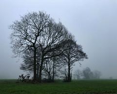 foggy trees (Chris Willis 10) Tags: tree nature landscape outdoors fog grass ruralscene sky scenics meadow forest loneliness season mist blue beautyinnature branch field tranquilscene morning