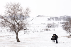 White world (MelindaChan ^..^) Tags: innermongolia china 内蒙古 snow white 雪 tree plant nature chanmelmel mel melinda melindachan 冰 bashang 壩上