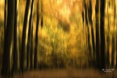 Autumn colors (IngridVD. Photography) Tags: ertbrugge herfst bomen autumn trees forest park dutch sunlight canon canon5dmkiv icm doubleexposure abstract colors yellow green antwerp 500px werkaandemuur