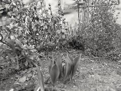 2019-02-16_04-44-03 (PlacesPic) Tags: garten garden pflanzen plants