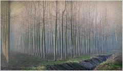 Pianura padana (Sandro Zubani) Tags: zubanisandro paesaggio landscape provinciadimantova canon nebbia