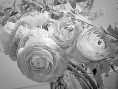 harada-flowers-69 (annie harada) Tags: flowers hana blumen fleurs bouquet noir et blanc black white