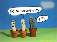 Oh, Igel Verschluckt?   /  Oh, hedgehog swallowed? (manfredkirschey) Tags: fotobearbeitung stodiofoto tabletop ministudio mit text kaktus manfred kirschey cartoon witz manfredkirschey