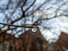 just a drop (jojoannabanana) Tags: 3652019 bokeh branches closeup color details dewdrop drop macro panasoniclumix university water waterdrop