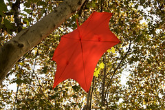 2018/11/24-ArendG7x-20 (Arend Kuester) Tags: autumn blatt china colours frenchconcession herbst leaf livingabroad red shadoes shanghai travel