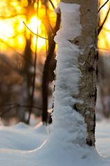 Sunset (PetuPictures) Tags: nature naturephotography pentax sigma winter snow finland