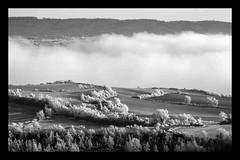 B/N (Cal Centelles) Tags: gebrada frozen bn bosc woods fog winter cold