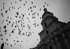 Ecclesia (disurbia) Tags: creativecommons urban city ciudad street calle santiago black bw nb monochrome distopia dystopia stgo streetphotography photography birds
