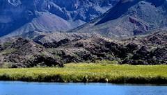 Bill Williams River (thomasgorman1) Tags: mountain mountains arizona desert canyon nature landscape nikon outdoors hiking az river water grass watergrass travel