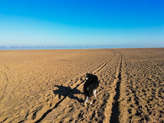 My border collie (kelvin mann) Tags: bordercollie collie sheepdog beach ingoldmells seaside lincolnshire lincolnshirecoast