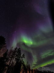 Northern Lights (Nigel Jones QGPP) Tags: auroraborealis northernlights green purple nature stunning amazing awesome wonderous forest frozen winter