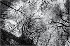 Trees, Trees, Trees... (Ody on the mount) Tags: albtrauf anlässe bäume em5 himmel mzuiko1250 natur omd olympus pflanzen schwäbischealb wanderung wolken bw clouds monochrome sw sky trees badurach badenwürttemberg deutschland de