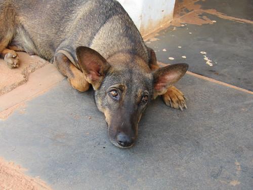 IMG_5435 mama dog