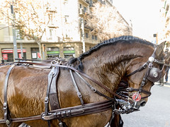 Tres Tombs de Barcelona 2019 (47) (Ismael March) Tags: barcelona trestombsdebarcelona trestombs santantoni
