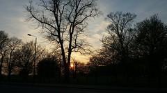 Clapham Common sunset (John Steedman) Tags: clapham common sunset claphamcommon london uk unitedkingdom england イングランド 英格兰 greatbritain grandebretagne grossbritannien 大不列顛島 グレートブリテン島 英國 イギリス ロンドン 伦敦 coucherdesoleil sonnenuntergang