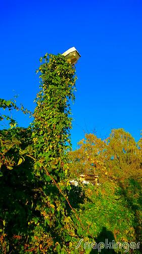 overgrown street lamp, bewachsene straßenlaterne