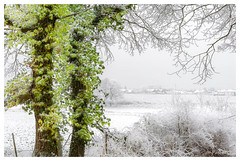 Vert poudré (Pascale_seg) Tags: paysage landscape neige snow neve givre blanc white hiver inverno winter mist brume brumeux misty arbre tree albero moselle lorraine grandest france nikon campagne field countryscape vert green verde nature natura